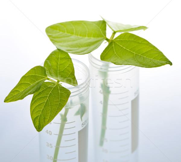 GM plant seedlings in test tubes Stock photo © elenaphoto