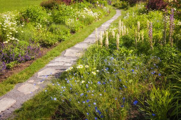 Wildflower garden and path Stock photo © elenaphoto