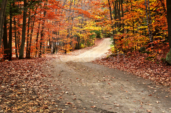 Stock photo: Autumn landscape with a path