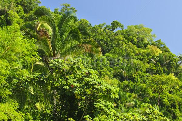 ストックフォト: 熱帯 · ジャングル · 背景 · 豊かな · 海岸 · メキシコ