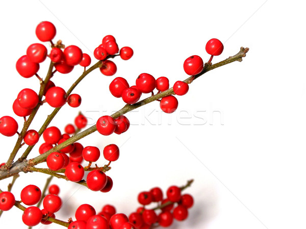 Rood christmas bessen bes boom decoratie Stockfoto © elenaphoto