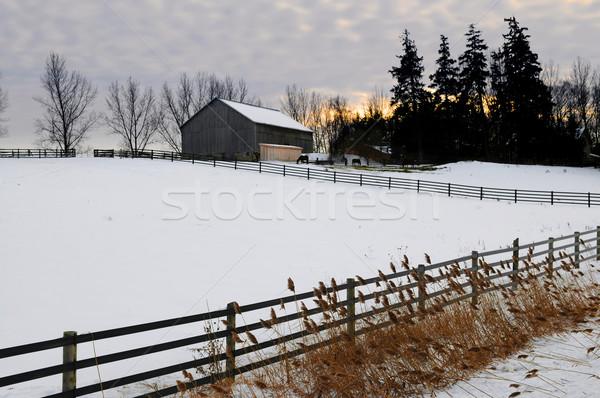 Stockfoto: Landelijk · winter · landschap · boerderij · schuur · paarden
