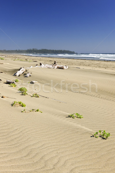 Sandy beach on Pacific ocean in Canada Stock photo © elenaphoto