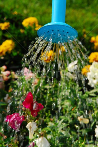 Locsol virágok víz áramló kék locsolókanna Stock fotó © elenaphoto