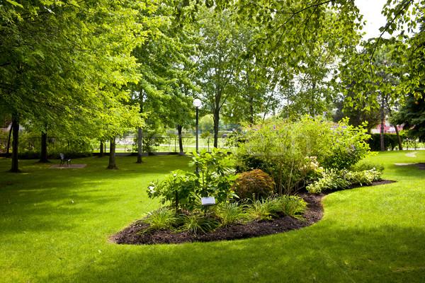 Garden in park Stock photo © elenaphoto