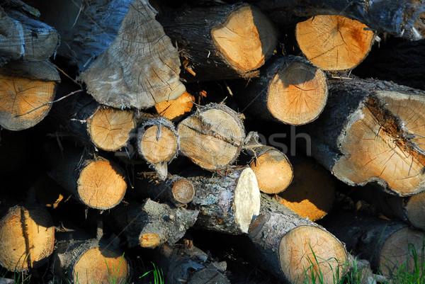 древесины вечер солнце дерево фон Сток-фото © elenaphoto