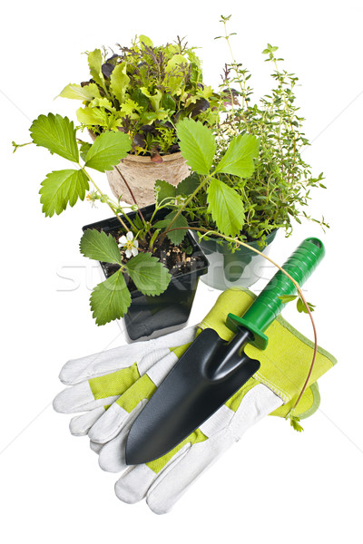 Gardening tools and plants Stock photo © elenaphoto