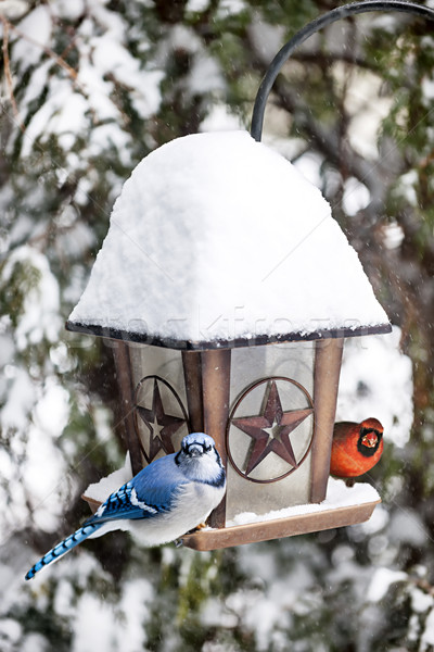 Birds on bird feeder in winter Stock photo © elenaphoto