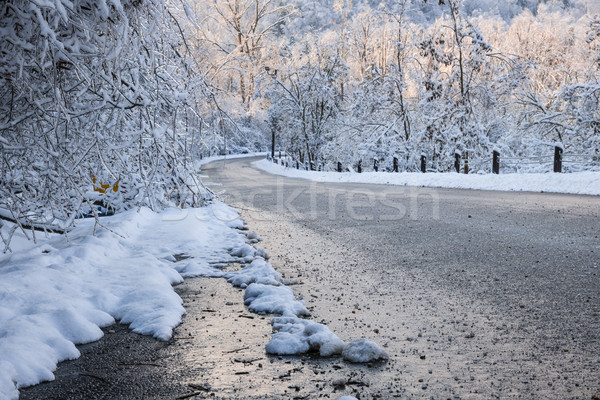 Scenic road in winter forest Stock photo © elenaphoto