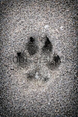 лапа печать песок собака животного Сток-фото © elenaphoto