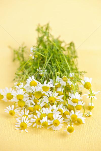Zdjęcia stock: Rumianek · kwiaty · świeże · żółty · charakter