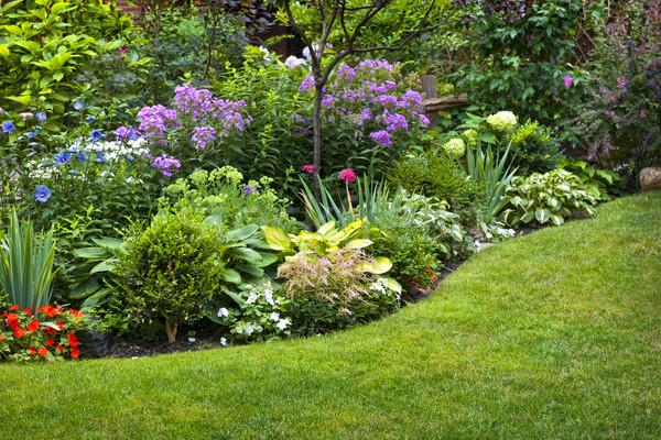 庭園 花 豊かな 花壇 カラフル 植物 ストックフォト © elenaphoto