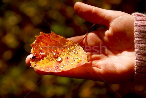 Hand fall leaf Stock photo © elenaphoto