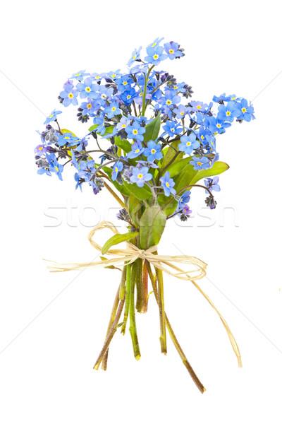 Bouquet of forget-me-nots Stock photo © elenaphoto