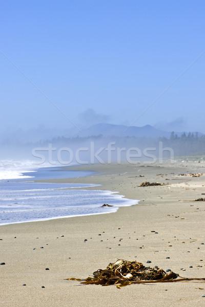 Sahil okyanus Kanada long beach park Stok fotoğraf © elenaphoto