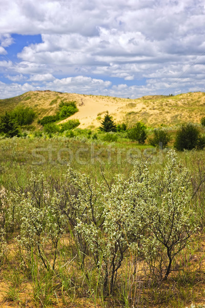 Sand dunes in Manitoba Stock photo © elenaphoto