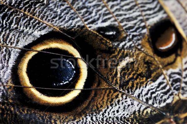 Owl Butterfly wing spots Stock photo © elenaphoto
