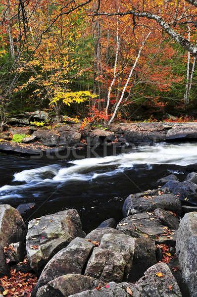 Fall forest and river landscape Stock photo © elenaphoto