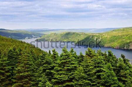 Nowa fundlandia sceniczny widoku Kanada lasu morza Zdjęcia stock © elenaphoto