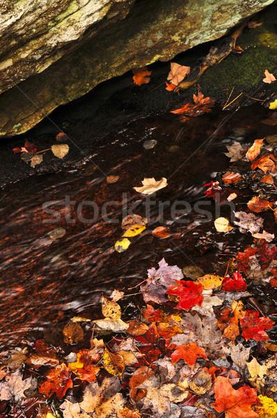 Autumn leaves in lake Stock photo © elenaphoto