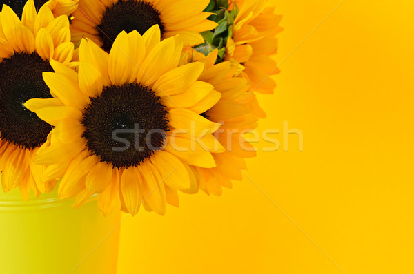 Tournesols vase bouquet jaune métal fleurs Photo stock © elenaphoto