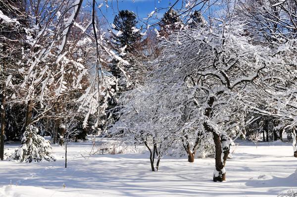 Kış park manzara güneşli ağır kar yağışı Stok fotoğraf © elenaphoto