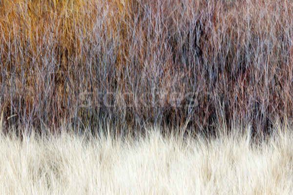 Blurred brown winter woodland background Stock photo © elenaphoto