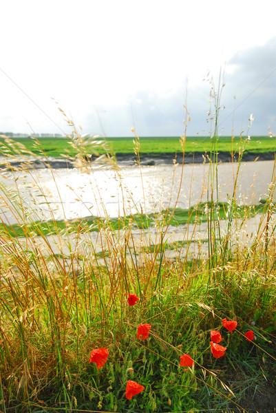 Landscape in Brittany Stock photo © elenaphoto