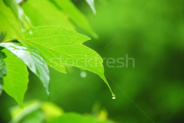 Foto stock: Folha · verde · chuva · macro · jovem · enforcamento · gota · de · chuva