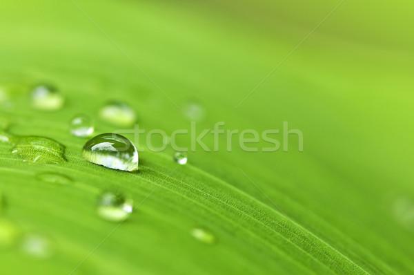 Zöld levél esőcseppek természetes zöld növény levél Stock fotó © elenaphoto