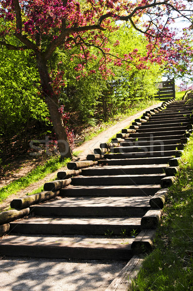Wooden stairway in a park Stock photo © elenaphoto