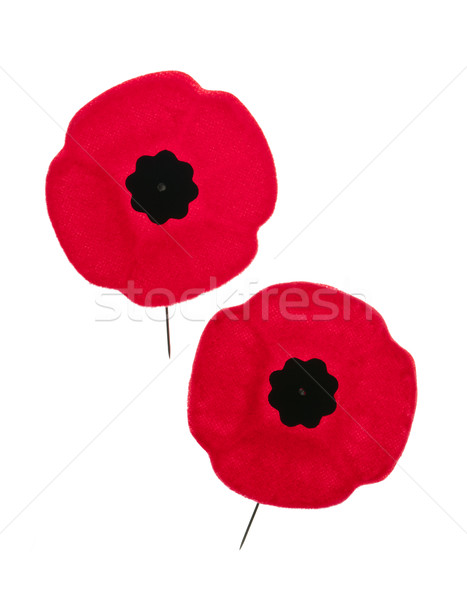 Remembrance Day poppies Stock photo © elenaphoto