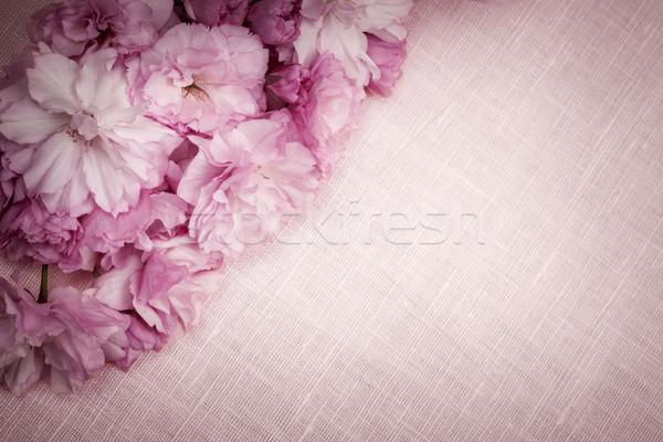Cherry blossoms on pink linen Stock photo © elenaphoto