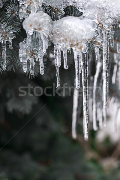 Kış ladin kapalı buz uzun Stok fotoğraf © elenaphoto