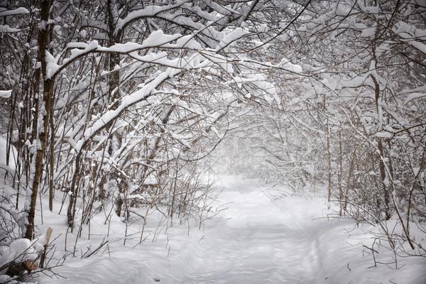 Kış yol orman ağır kar Stok fotoğraf © elenaphoto
