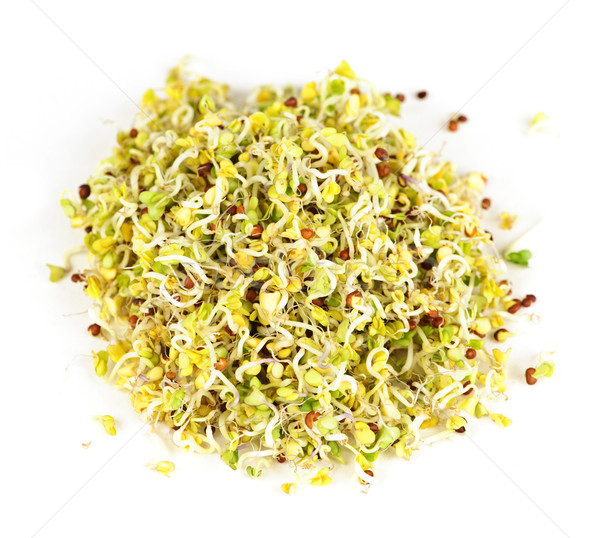 Alfalfa sprouts Stock photo © elenaphoto