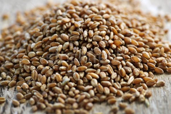 Whole grain wheat kernels closeup Stock photo © elenaphoto