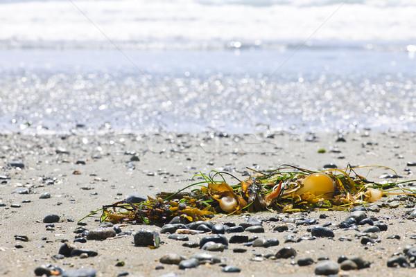 Plaj detay okyanus sahil Kanada deniz yosunu Stok fotoğraf © elenaphoto