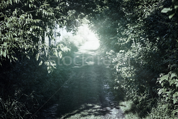 Narrow rural road in forest Stock photo © elenaphoto