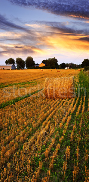Golden sunset over farm field Stock photo © elenaphoto