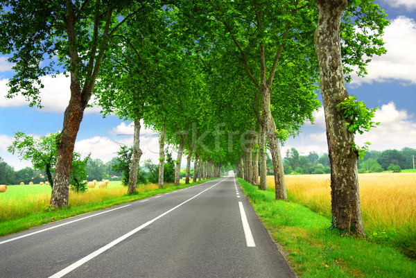 French country road Stock photo © elenaphoto