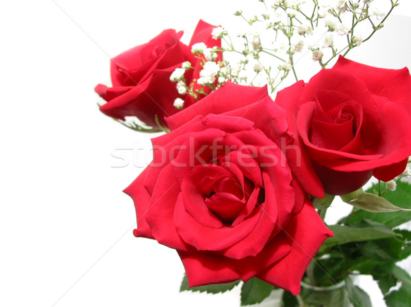 Aumentó ramo blanco tres rosas rojas espacio Foto stock © elenaphoto