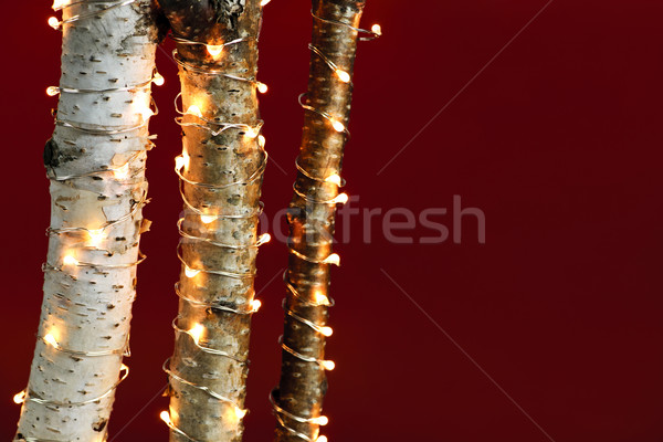 Christmas lights on birch branches Stock photo © elenaphoto