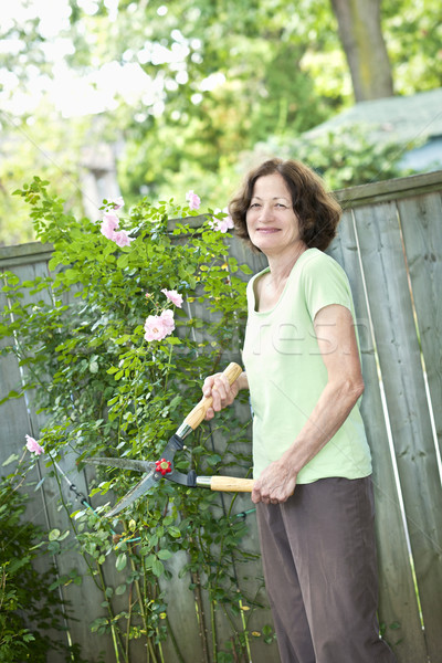 Senior woman pruning rose bush Stock photo © elenaphoto