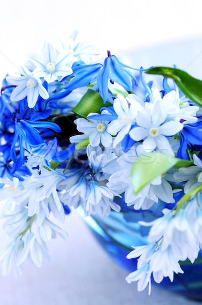 первый весенние цветы синий букет цветок Сток-фото © elenaphoto