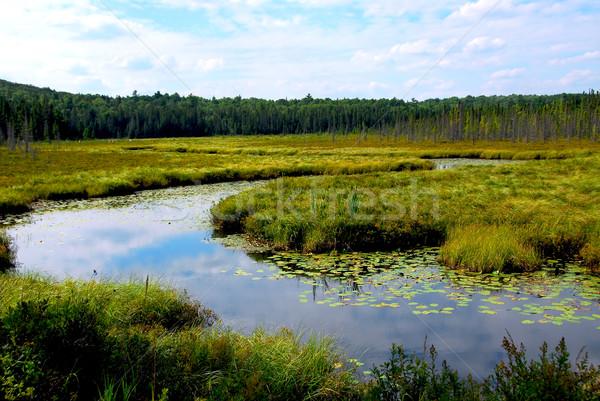 Wetlands Stock photo © elenaphoto