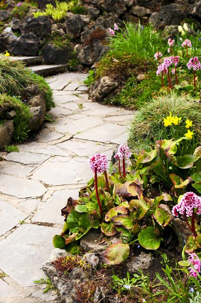 春 庭園 多年生植物 花 植物 花 ストックフォト © elenaphoto