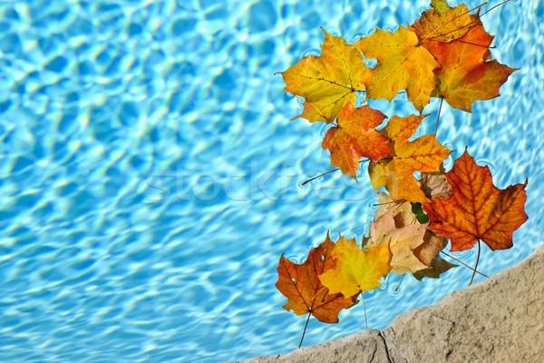 Stok fotoğraf: Düşmek · yaprakları · havuz · yüzme · havuzu · su