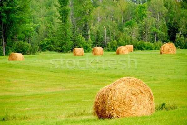 Hay bales Stock photo © elenaphoto