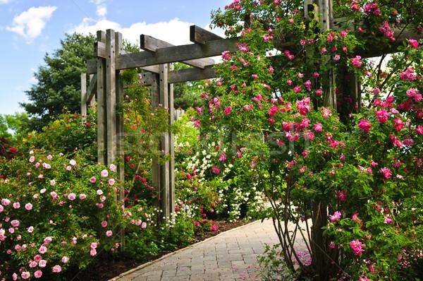 üppigen grünen Garten Stein Landschaftsbau Blumen Stock foto © elenaphoto